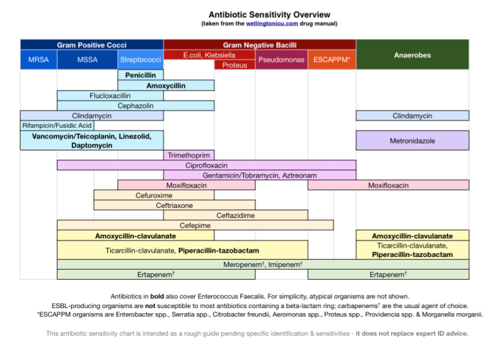 Great simplified chart on antibiotic sensitivity overview crit